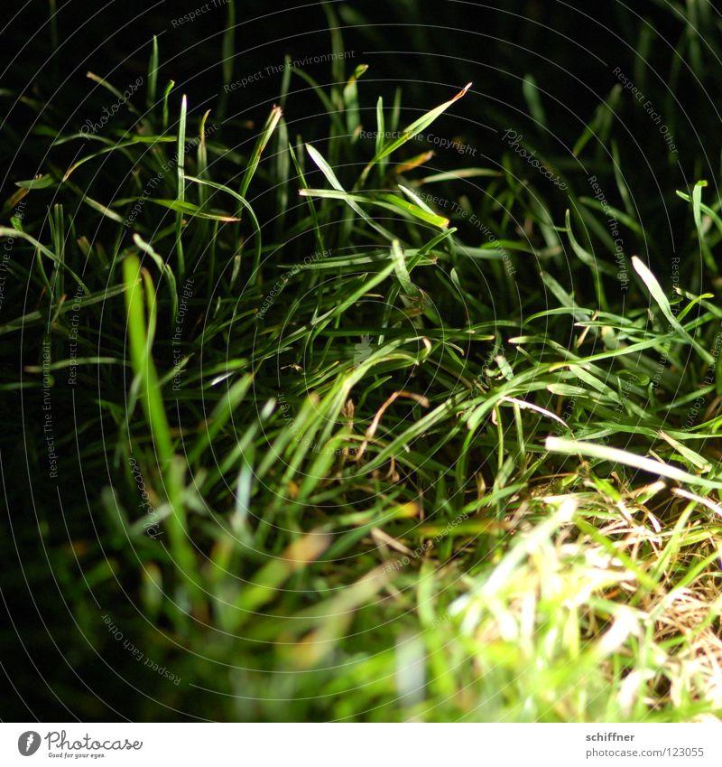 Green Plant Dark Meadow Grass Garden Park Lawn Bushes Blade of grass Garden Bed (Horticulture) Gardener Flowerbed Imboden