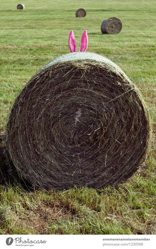 Easter Bunny? Art Esthetic Hide Hare ears Easter egg nest Pink Distinctive Beginner Bale of straw Ear Meadow Exterior shot Nature Funny Colour photo