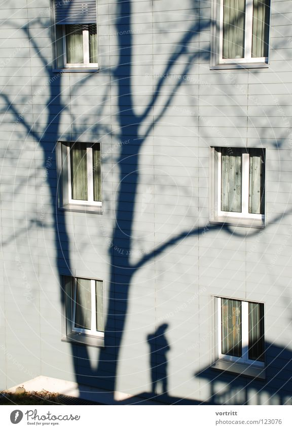 Tree Winter House (Residential Structure) Window Moody Glass Living or residing Branch Story Tree trunk Drape Quarter Photographer Self portrait Domicile