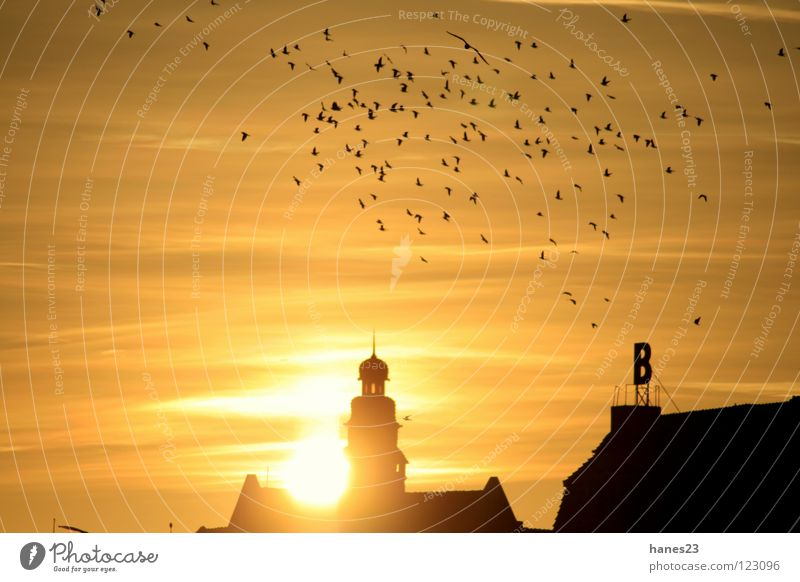 Dusk - PartThree Sun Winter Sky Clouds Town Tower Roof Bird Yellow Gold Sunset minds banks of the Weser Silhouette Back-light