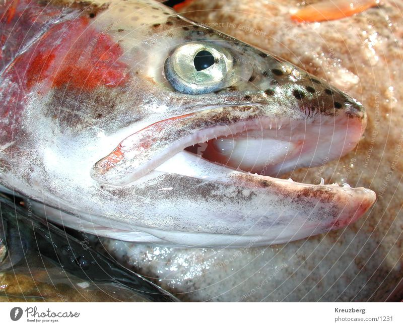 fish Seafood Nutrition Death Marine animal Fish
