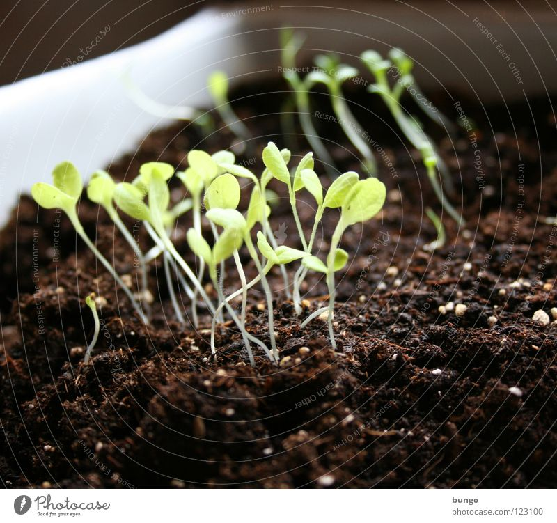 Nature Green Plant Leaf Life Power Earth Growth Stalk Vegetable Botany Seed Illuminate Biology Pull Sowing