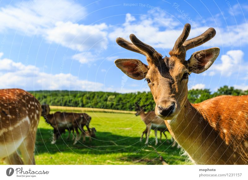 Eh! What are you looking at? Vacation & Travel Tourism Trip Environment Nature Landscape Animal Sky Clouds Park Meadow Field Forest Wild animal Animal face Pelt