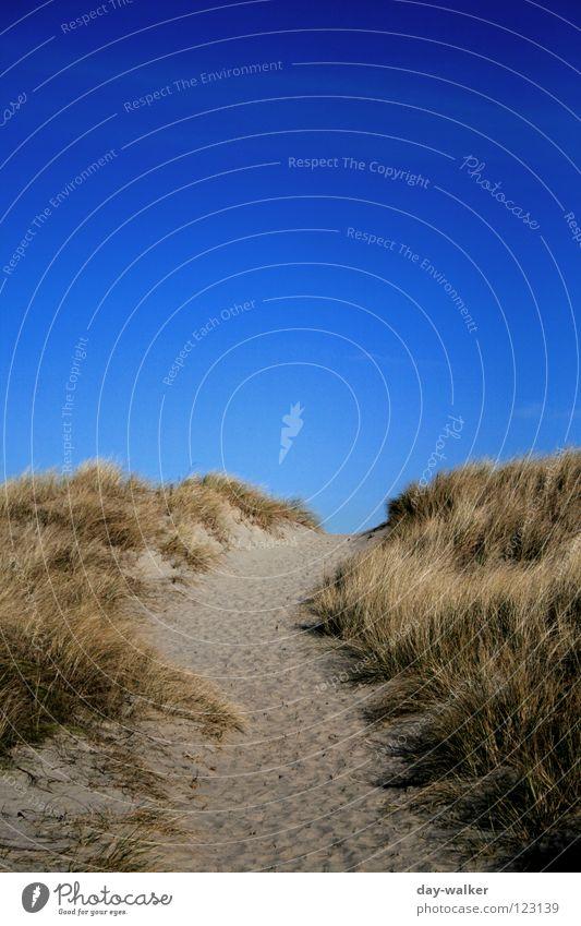 Nature Sky Ocean Winter Beach Vacation & Travel Grass Freedom Lanes & trails Sand Coast Earth Island Beach dune Beautiful weather North Sea