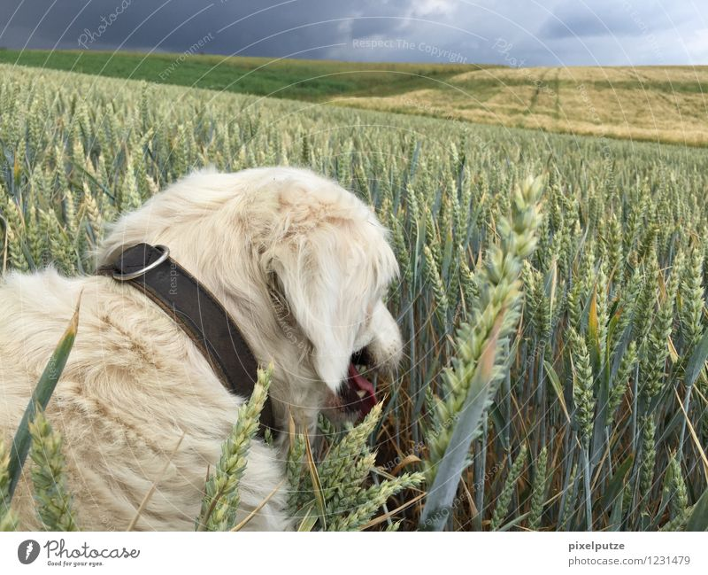Nature Dog Plant Landscape Animal Natural Field To go for a walk Pet Agricultural crop Dog collar Walk the dog
