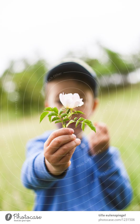 Small presents... Trip Summer Child Boy (child) Infancy Life 1 Human being 3 - 8 years Plant Spring Flower Rose Blossom Foliage plant Garden Park Meadow