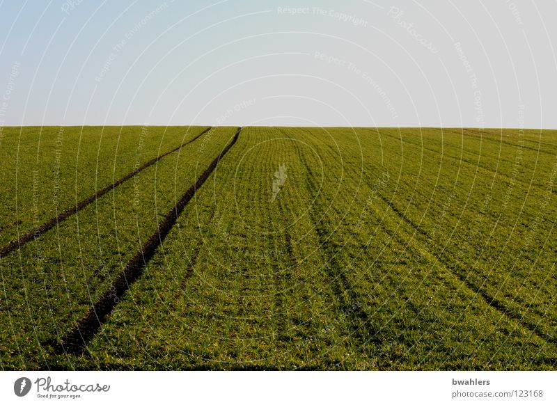 Field - Track Green Horizon Furrow Sowing Earth Sand Americas Sky Blue Far-off places Tracks Lanes & trails winter cereal
