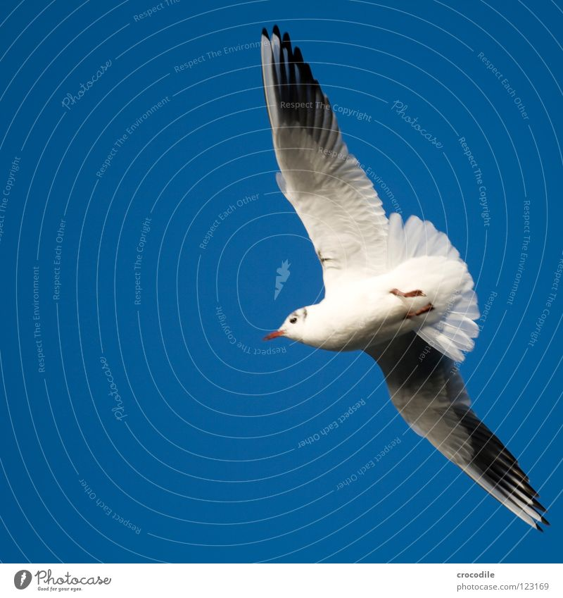 the sky is the limit Seagull Bird Infinity Sailing Claw Beak White Innocent Span Air Glide Hover Tails Beautiful Flying Wing Freedom Nature Sky