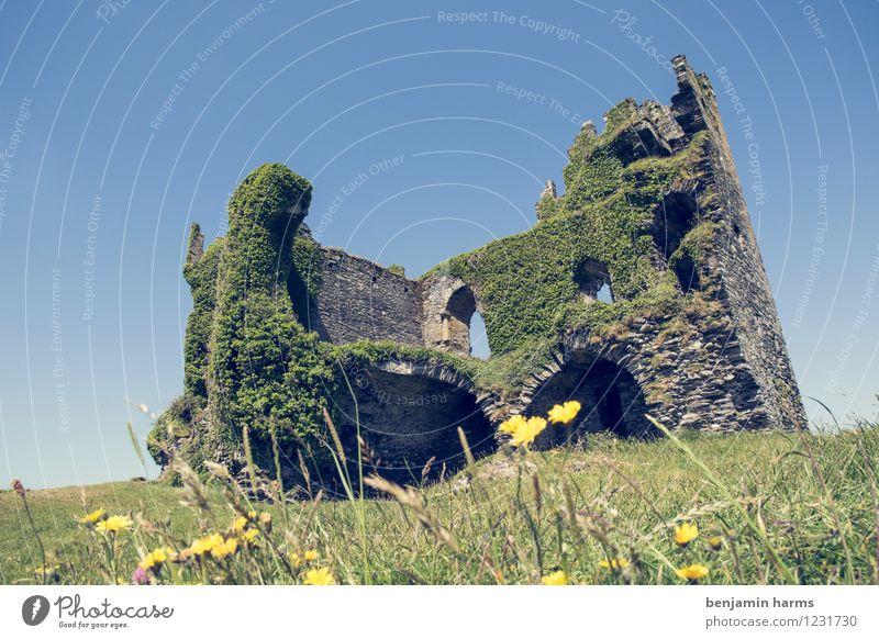 nu home Cloudless sky Beautiful weather Plant Flower Grass Ivy Ireland Deserted Castle Ruin Wall (barrier) Wall (building) Facade Tourist Attraction