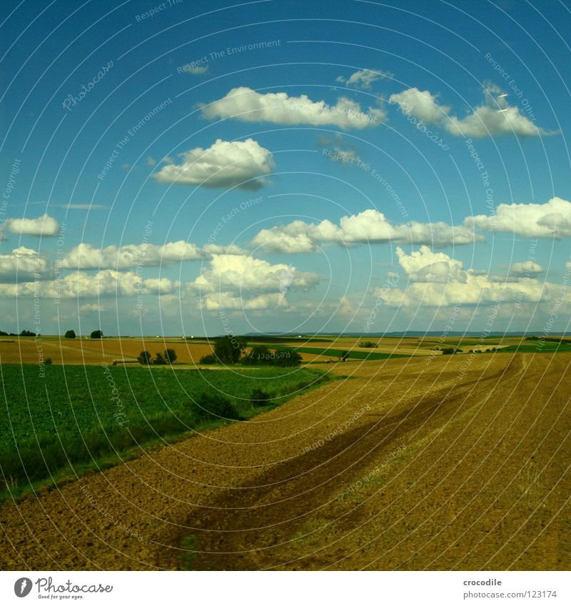 Tree Summer Clouds Nutrition Meadow Field Bushes Agriculture Agriculture Production Blue sky Manmade landscape