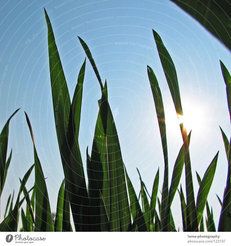 Sky Blue Sun Summer Relaxation Meadow Warmth Grass Spring Lighting Weather Field Lie Physics Hot Blade of grass