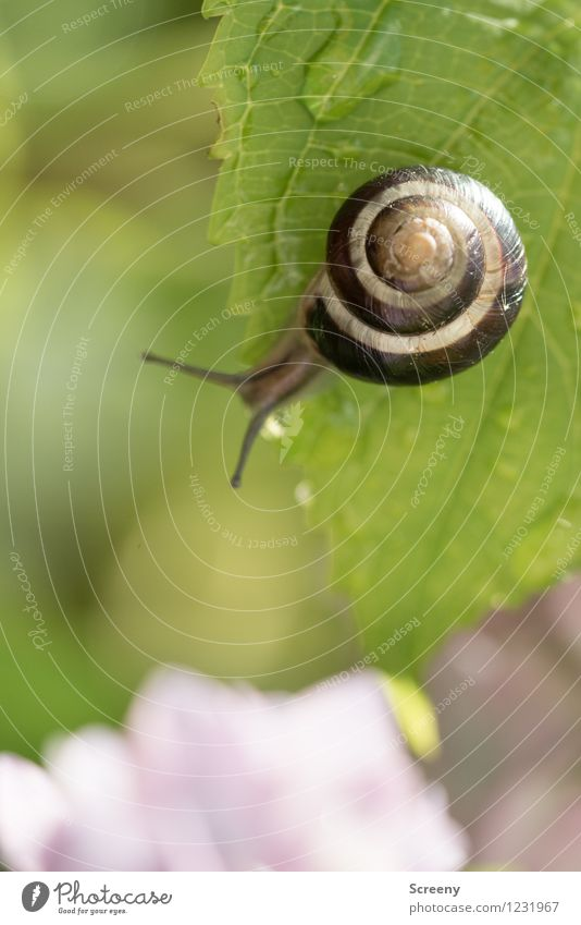 pretty high... Nature Plant Animal Water Drops of water Spring Summer Leaf Garden Park Snail 1 Small Near Wet Brown Green Adventure Contentment Height Climbing