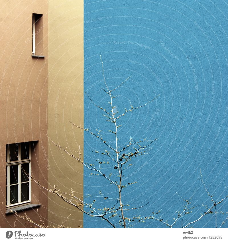 Living in the blue Tree House (Residential Structure) Building Wall (barrier) Wall (building) Facade Window Growth Simple Blue Brown Design Corner Hide Colour
