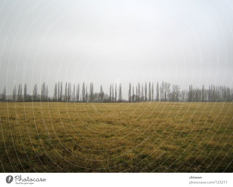 tree-race Dark Tree Meadow Field Dreary Far-off places Horizon Lifeless Clouds Grief Moody Gray Avenue Weather Seasons Landscape Earth Bright Cover Sadness