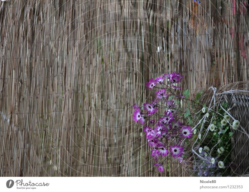 Flowers woven in Blossom Foliage plant Esthetic Plaited Basket Bamboo Screening Still Life Delicate Violet Colour photo Exterior shot Deserted Copy Space left