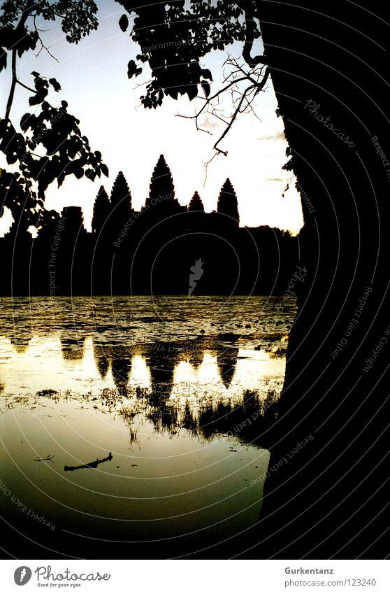 Water Tree Lake Gold Tower Asia Skyline Monument Tree trunk Landmark Dusk Temple House of worship Evening sun Cambodia Angkor Wat