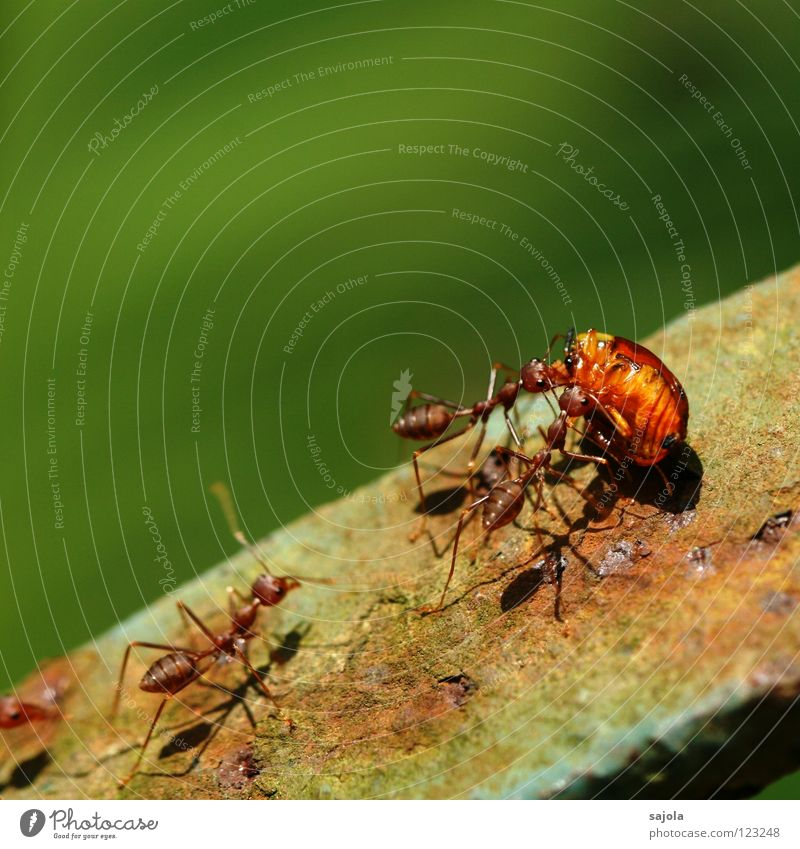 Green Red Animal Death Orange Together Going Group of animals Help Logistics Asia Insect Appetite Attachment Virgin forest Mobility