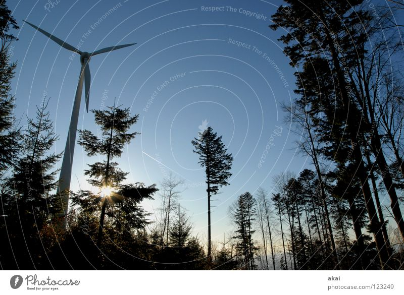 Sky Forest Line Perspective Energy industry Electricity Technology Wind energy plant Geometry Paradise Clearing Site Sky blue Deciduous tree Coniferous trees Coniferous forest