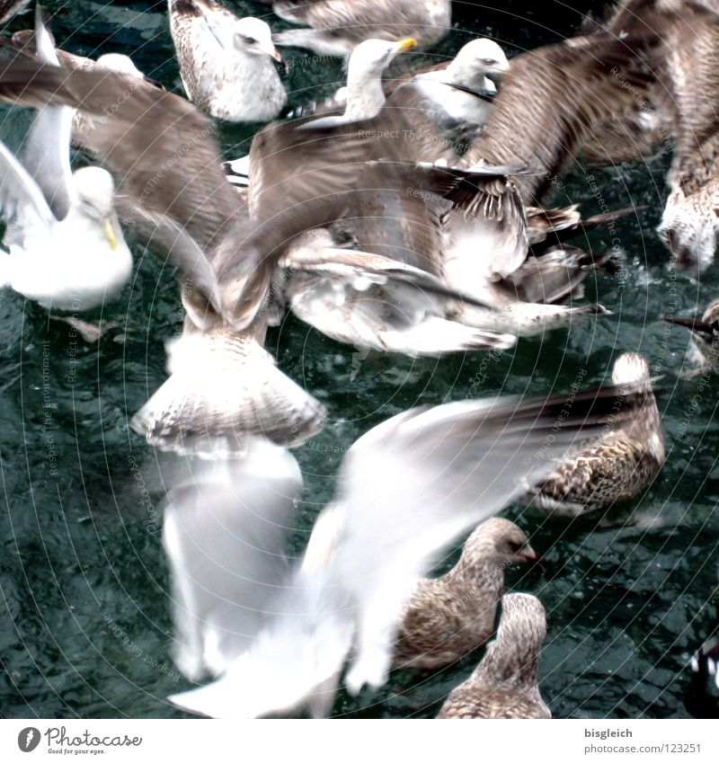 Gulls II Colour photo Subdued colour Exterior shot Deserted Bird's-eye view Ocean Animal Water Seagull Group of animals Flock Speed Chaos Loud Food envy frantic