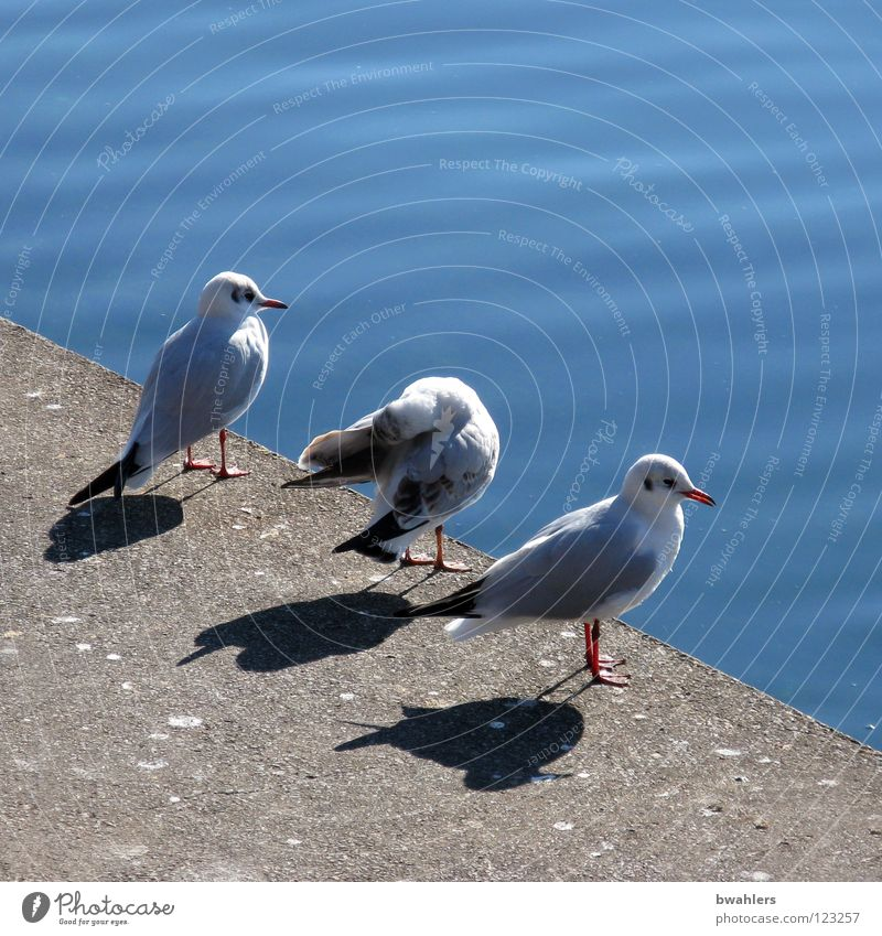 what do we do now? Seagull White Edge 3 Lake Calm Sea promenade Water Bird Blue Stone Coast Looking Lake Constance Shadow