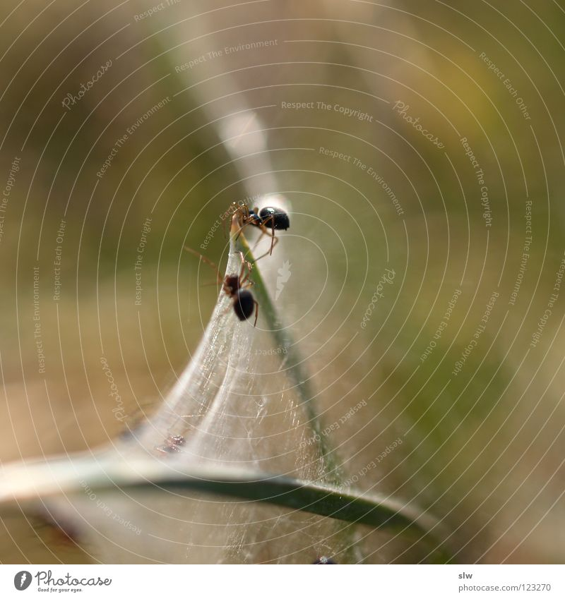 2 Net Blade of grass Spider Spider's web Woven