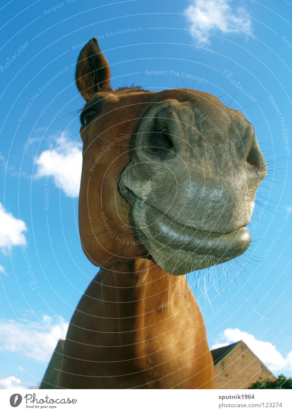 a' from the horse Horse Animal Snout Brown Nostrils Mammal Funny cartoon Americas Farm