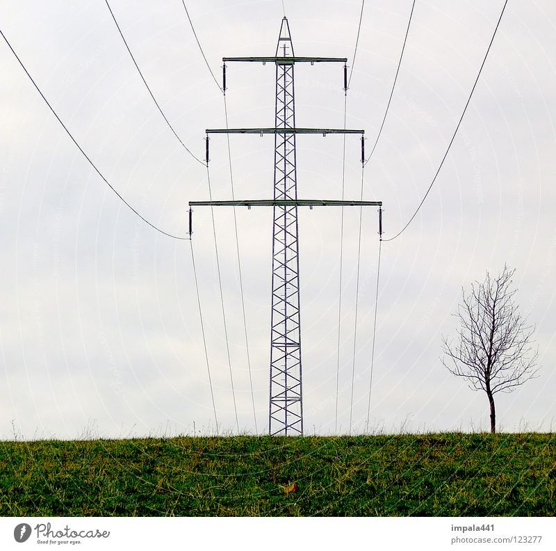high voltage Electricity Electronic Smog Environment Destruction Tree Wood flour Meadow Small Large Household Power Force Electricity pylon Cable Rope Metal