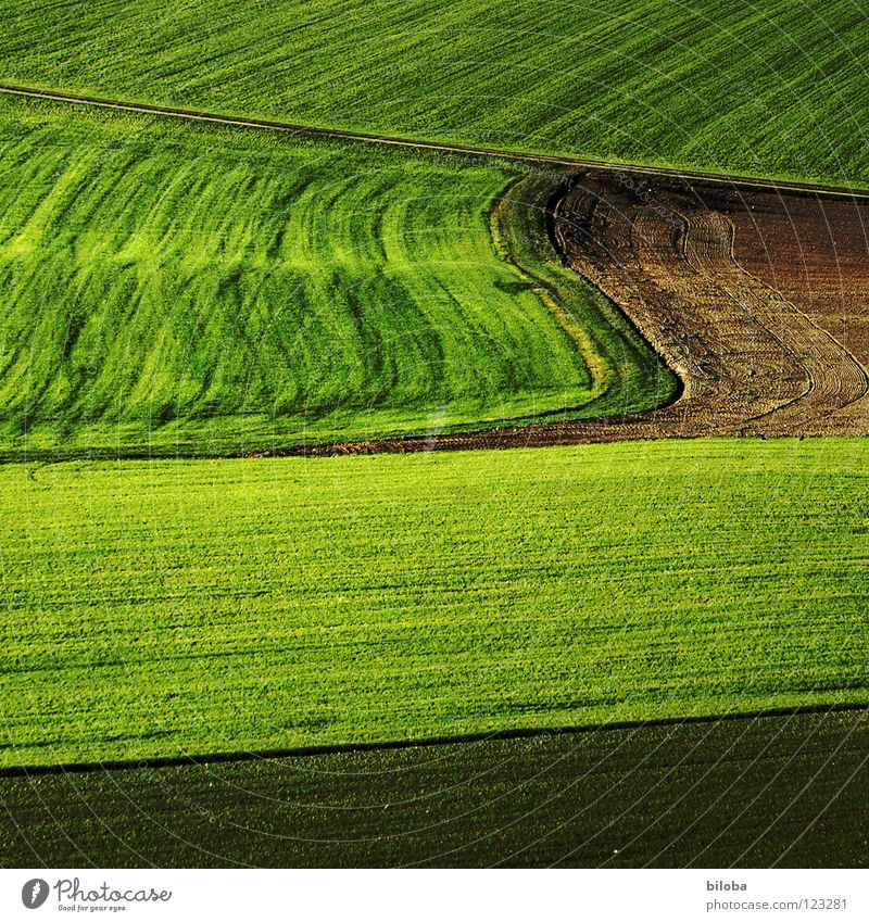 Art of farming II Pattern Plow Plowed Sprout Plantlet Back-light Shadow Autumn Food Agriculture Sowing Occur Green Fresh Life Field Product Waves
