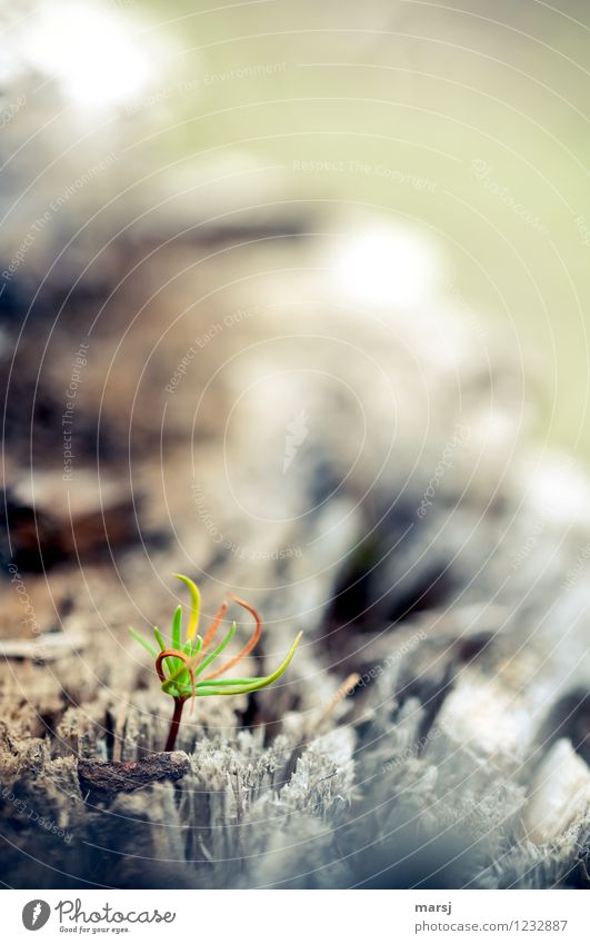 Nature Green Tree Loneliness Life Natural Small Growth Authentic Beginning Simple Cute Hope Thin Brave Spring fever