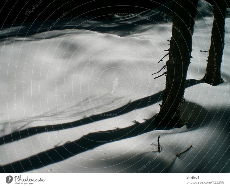 almost black and white.... Hiking Mountaineering Snowscape Forest Tree Calm Tree trunk Snow layer White Exterior shot Winter Shadow soft shapes