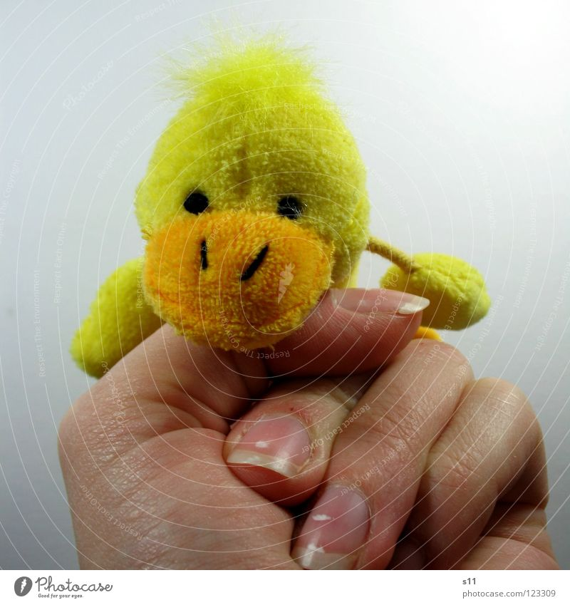 Duck Shoot Guguus. Plush Cuddly toy Finger puppet Toys Yellow Beak Hand Fingers Fingernail Fist Playing Forefinger Children's room Joy Hair and hairstyles Punk