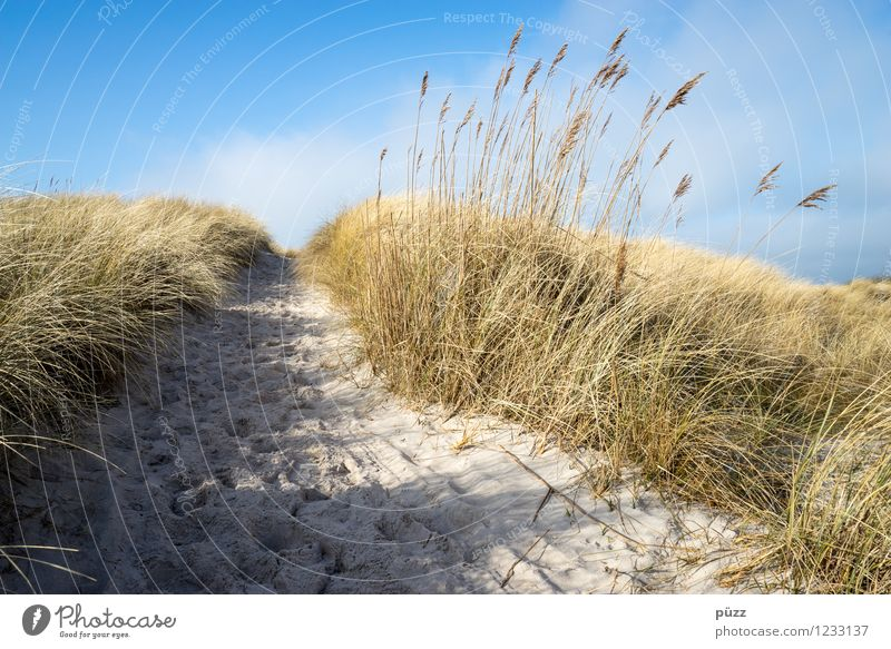 longing Vacation & Travel Tourism Trip Freedom Summer Summer vacation Sun Beach Ocean Environment Nature Landscape Elements Sand Sky Cloudless sky Plant Grass