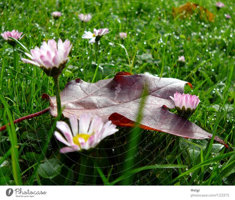 Green Colour Flower Red Leaf Yellow Autumn Meadow Grass Brown Park Glittering Lie Stand Drops of water Point