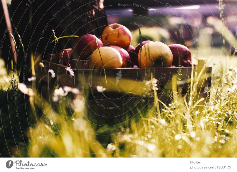 Nature Green Red Healthy Eating Environment Yellow Autumn Grass Garden Food Fruit Fresh Earth Nutrition Harvest Organic produce