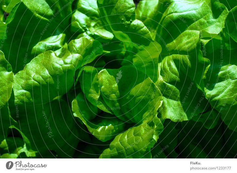 Nature Plant Green Leaf Healthy Garden Food Fresh Nutrition Delicious Organic produce Diet Vegetarian diet Lettuce Salad Vegan diet