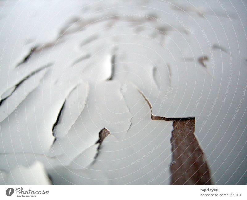 Old White Wood Transience Rust Varnish Flake off