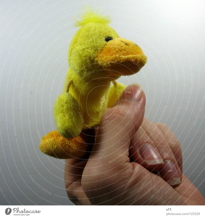 Hand Joy Yellow Playing Hair and hairstyles Funny Feet Arm Fingers Toys Side Duck Punk Beak Thumb Fingernail