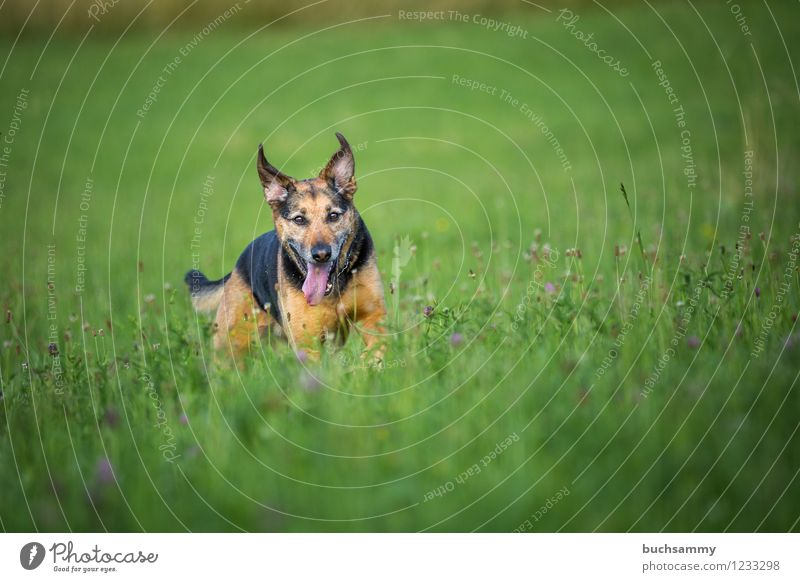 Happy dog Water Animal Pet Dog 1 Brown Green Black Crossbreed Rottweiler Shepherd dog Colour photo Multicoloured Exterior shot Deserted Copy Space top