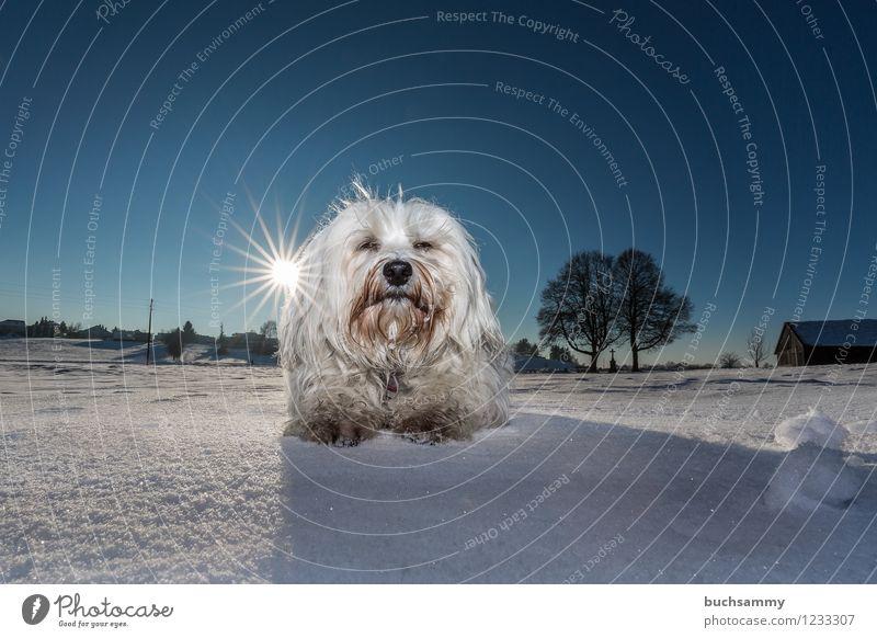Dog Blue White Animal Snow Germany Lie Beautiful weather Pet