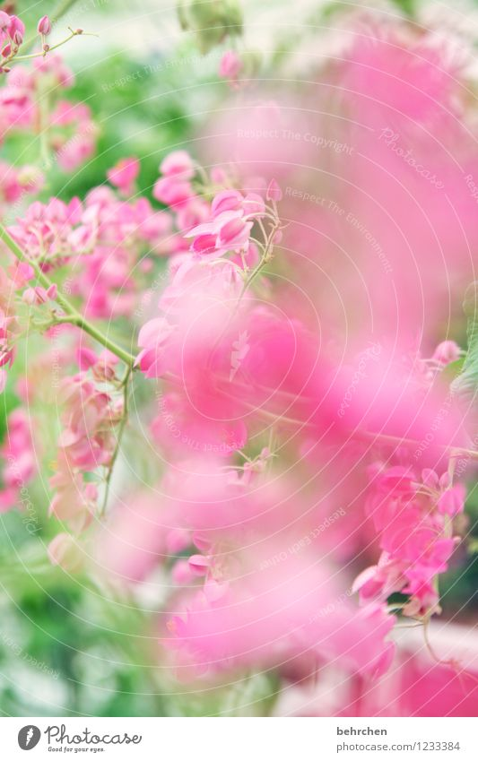 Nature Plant Green Beautiful Summer Leaf Spring Blossom Autumn Pink Growth Blossoming Beautiful weather Kitsch