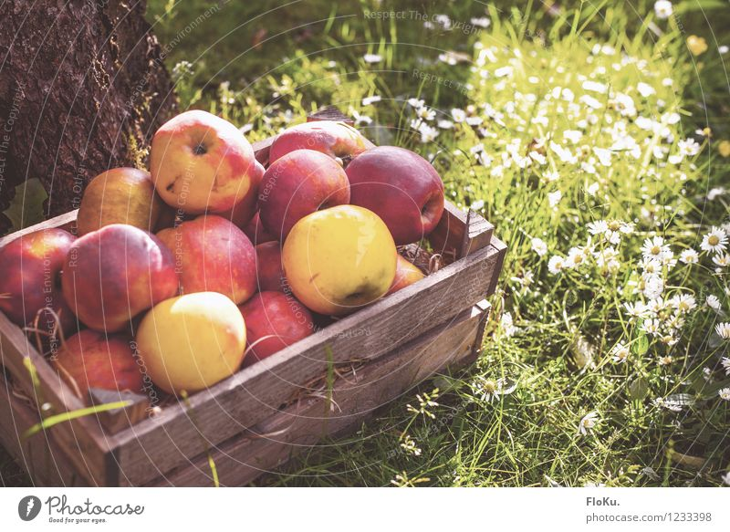 Nature Plant Green Red Yellow Autumn Grass Healthy Food Fruit Fresh Delicious Harvest Organic produce Apple Daisy