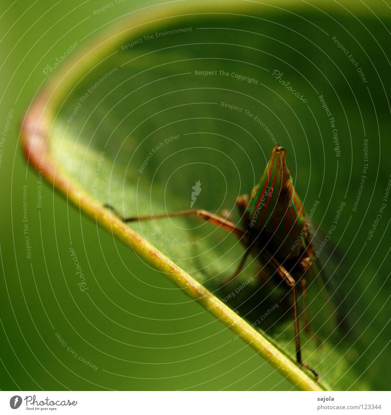 Green Animal Leaf Eyes Head Legs Orange Sit Wait Point Animal face Asia Insect Virgin forest Striped Beetle