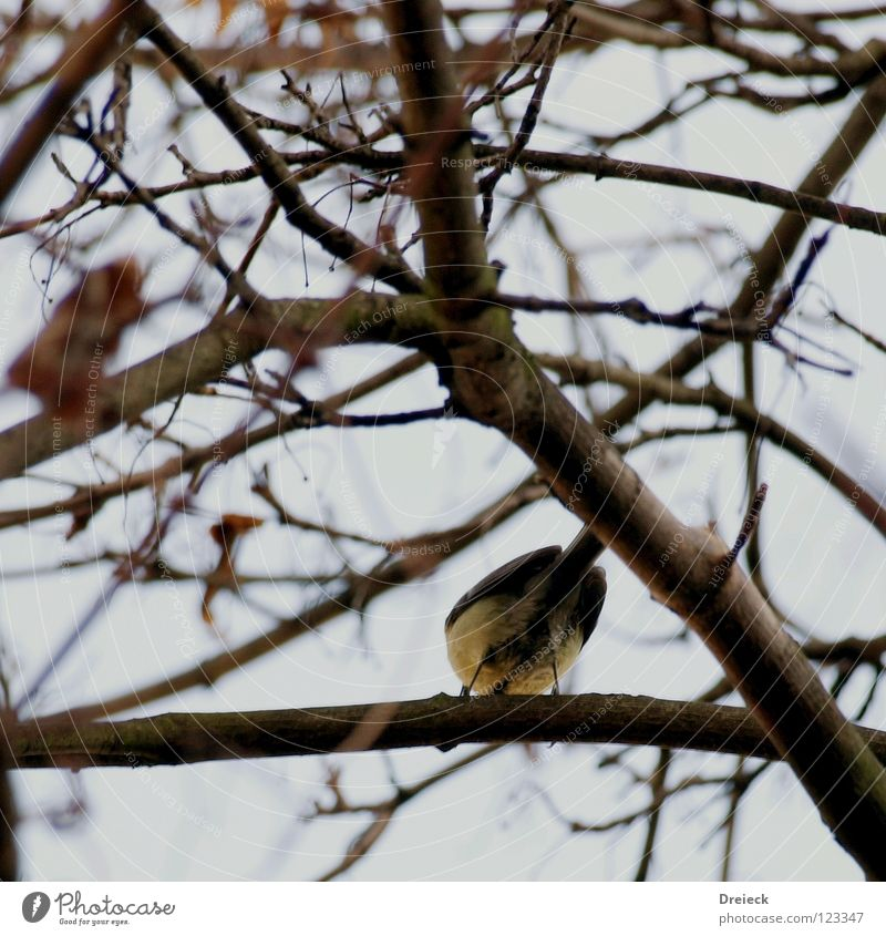 Look me in the eye... Bird Air Plumed Beak Black Dark Brown Animal Tree Bushes Leaf Treetop Sky Flying Feather Beautiful weather Blue Nature Landscape Branch