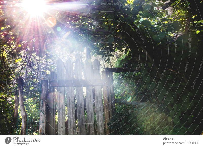 Gate to light Landscape Garden Garden door Wooden gate Wooden door Garden fence Illuminate Glittering Gold Green White Moody Romance Mysterious Idyll Mystic