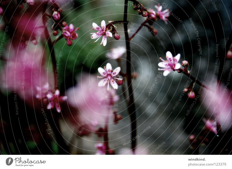 Nature Flower Summer Colour Spring Warmth Pink Wind Soft Physics Delicate Fragile