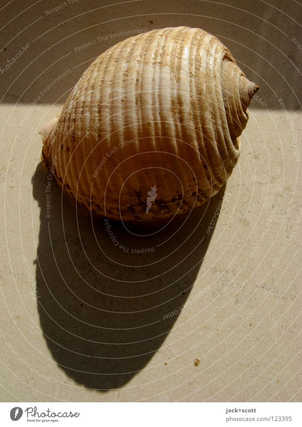 Shadow casting with shell Decoration Mussel 1 Animal Souvenir Collector's item Lie Firm Round Warmth Moody Protection Time Spiral Bobbin Snail shell Memory