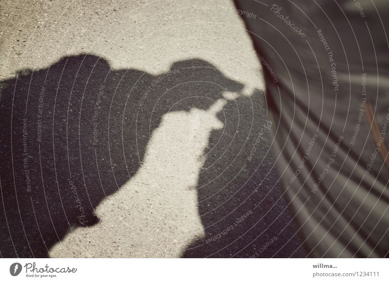 summer flirtation Couple Kissing Emotions Sympathy Love Infatuation Desire Lust Shadow play Flirt Intimacy Exterior shot Light Silhouette
