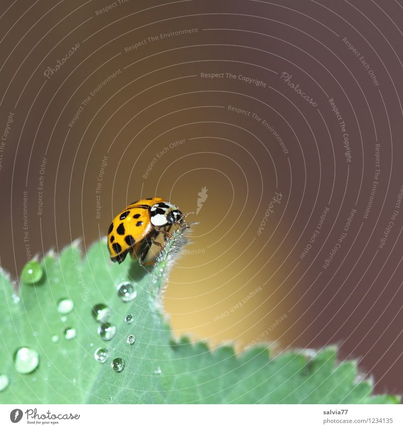 in the morning at 7 Nature Plant Animal Spring Summer Leaf Garden Wild animal Beetle Wing 1 Touch Glittering Crawl Fresh Happy Small Wet Above Positive Soft