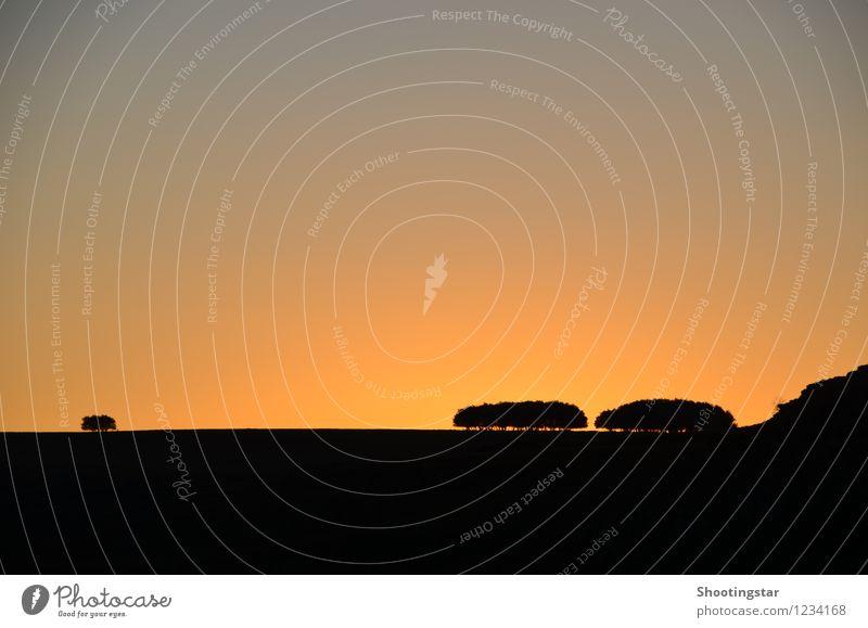 Psalm 92:13-16 Nature Landscape Sky Sunrise Sunset Tree Beautiful Orange Red Truth Honest Wisdom Unwavering Purity Hope Belief Grief Loneliness Esthetic Colour