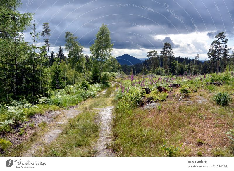 bohemia I like you Life Harmonious Well-being Vacation & Travel Tourism Trip Far-off places Sun Mountain Hiking Environment Nature Landscape Plant Sky Clouds